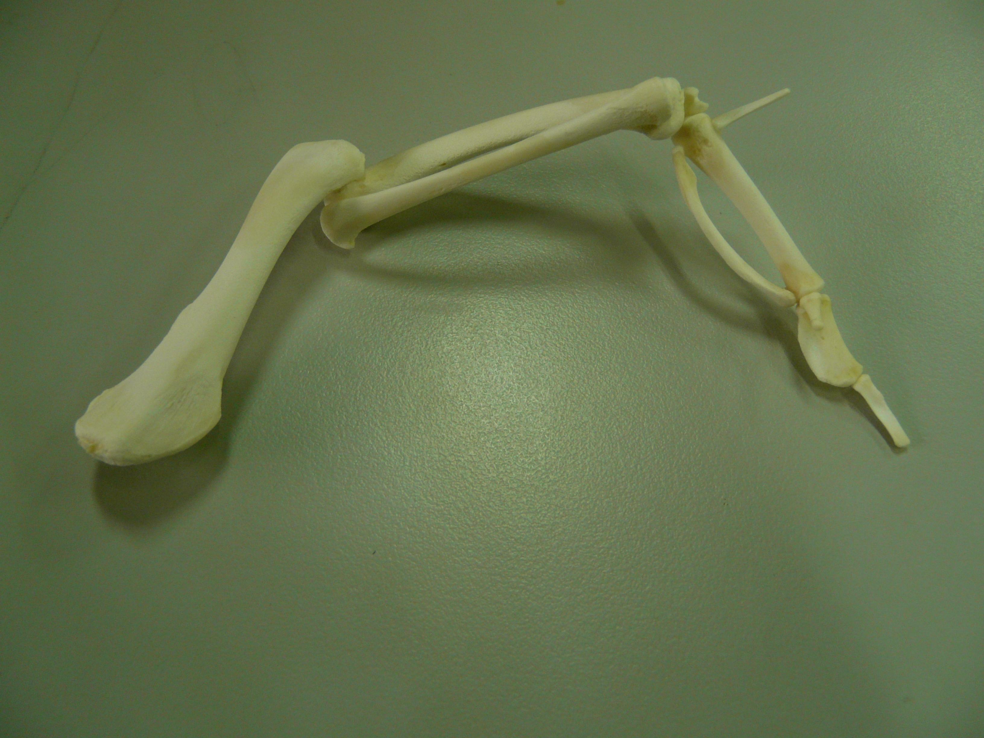 esqueleto | Nuestro Blog de clase.